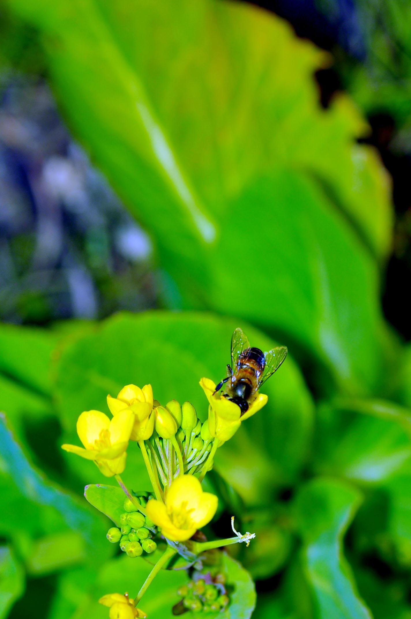 一只小蜜蜂 飞在花丛中