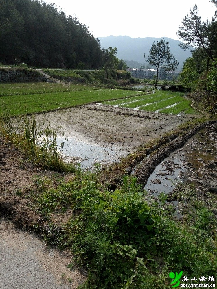石镇程河建设血淋淋屠宰场,几百户农家生活将被彻底污染!
